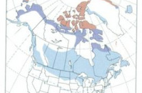 Distribution of snowy owl in North America
